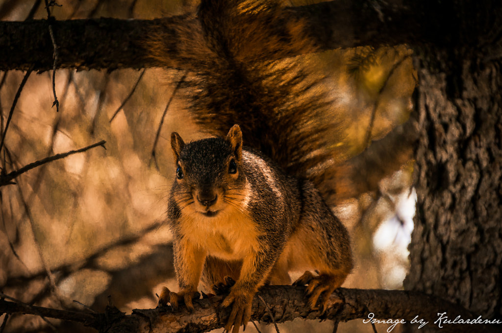 Squirrel-Sept-27th-2014-3.jpg